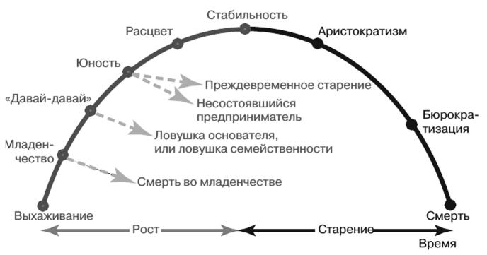 Три модели жизненных циклов и развития организации