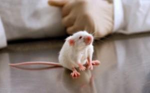 мышь депрессия поражение