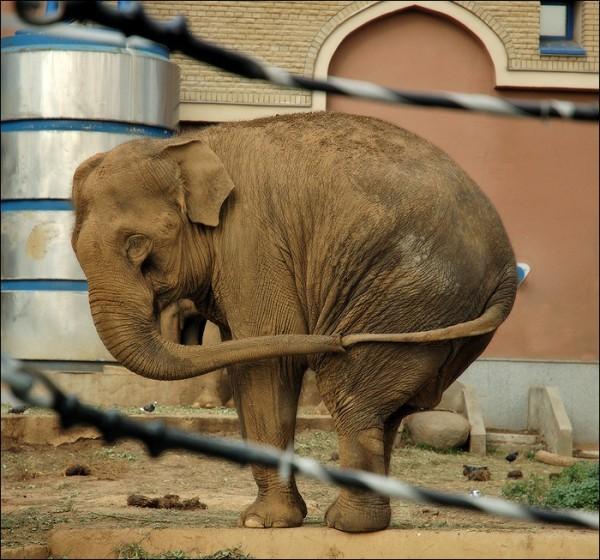 Одиноко ему там. Московский зоопарк
