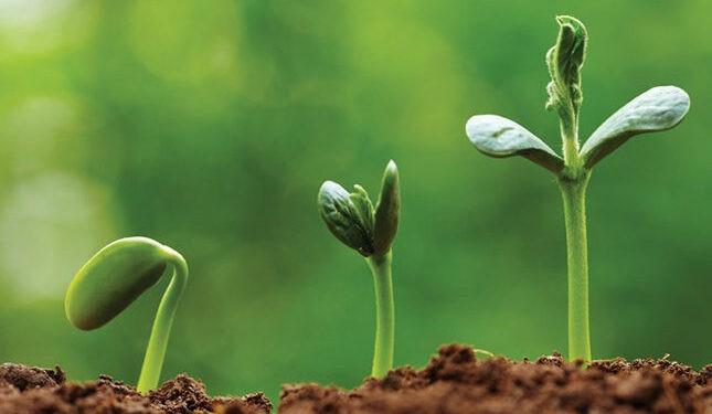 4 стратегии роста: какой путь выберет ваша компания?